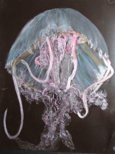 Radio de la méduse